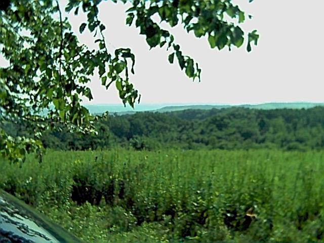 NY Herkimer County Woodlot
