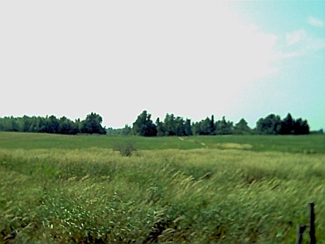 Antwerp NY Farm