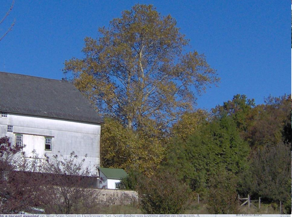 Sycamore Tree at Our Highland Hill Farm Barn in Oct 2005